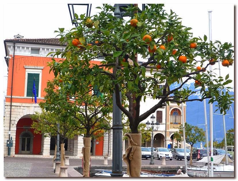 Апельсиновое дерево зимой