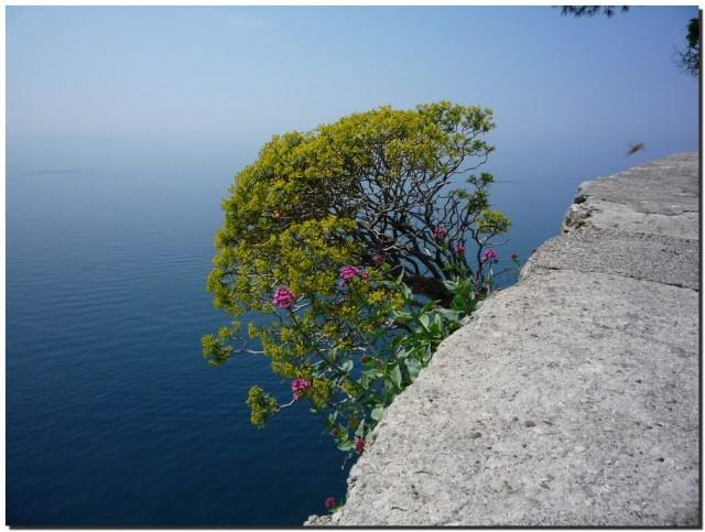 Цветок на скале над морем