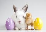 два яйца, кролик и цыплёнок