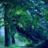 деревья в сумерках
