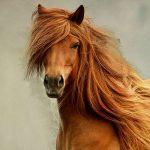 лицо коня