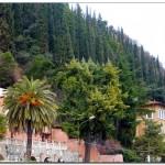 кипарисы зимней Италии