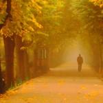 Одинокий силуэт. Осень