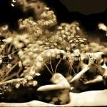 осенние травы