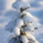 маленькая ёлочка под снегом