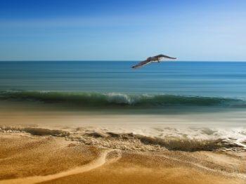 море песок чайка
