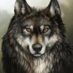 Волк - рисунок