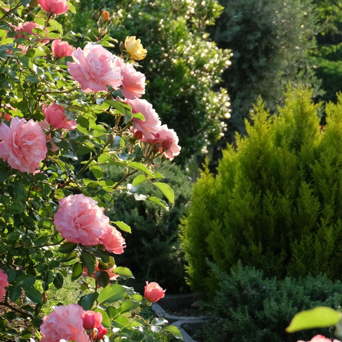 Фрагмент летнего сада