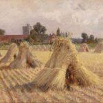 Снопа пшеницы