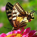 Бабочка - фото